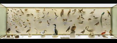 the birdcase