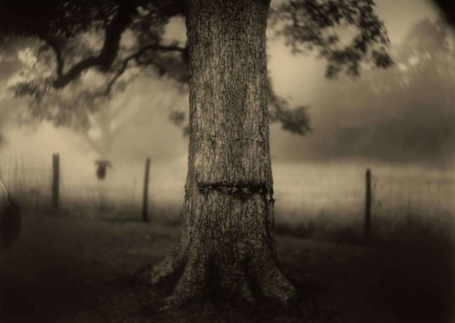 PEM Celebrates Distinguished American Photographer Sally Mann and Her Compelling Vision of the South