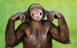 monkey-02