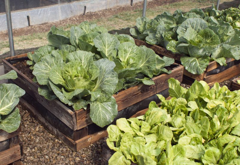 The Key To A Plentiful Garden: Knowing When to Plant What Vegetables This Spring | The Money Manual