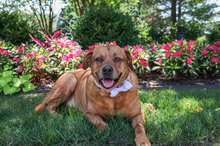 dog with a bowtie in flowers
