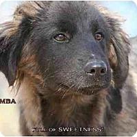 Adopt A Pet :: AST-Pumba - Tyler, TX