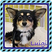 Adopt A Pet :: Luigi - Los Angeles, CA