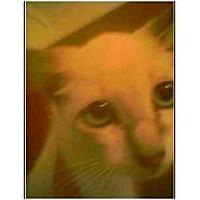 Adopt A Pet :: Brendon - Owasso, OK