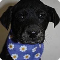 Adopt A Pet :: Daisy - Stilwell, OK