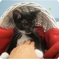 Adopt A Pet :: Squiggy - Sterling Hgts, MI