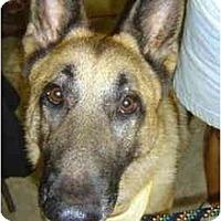 Adopt A Pet :: Chief - Pike Road, AL