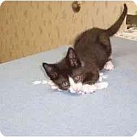 Adopt A Pet :: Max Bialystock - Secaucus, NJ