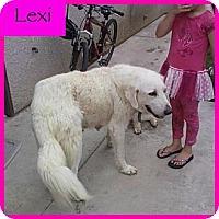Adopt A Pet :: Lexi - Orange Cove, CA