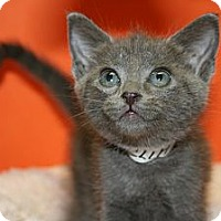 Adopt A Pet :: MICHELLE - SILVER SPRING, MD