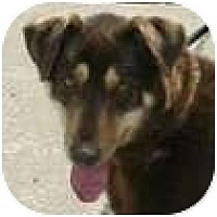 Adopt A Pet :: Remy - Hamilton, ON