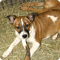 Adopt A Pet :: Gloria - Gainesville, FL