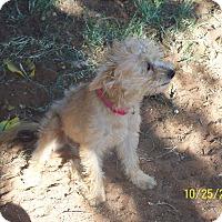 Adopt A Pet :: Gretel - Andrews, TX