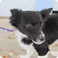 Adopt A Pet :: Sachi & Raffi - Sacramento, CA