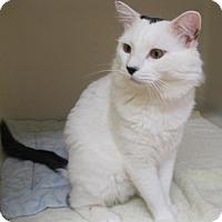 Adopt A Pet :: Elijah - Ashland, MA