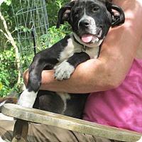 Adopt A Pet :: Sagan - Lincolndale, NY