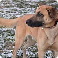 Adopt A Pet :: Bandit - Berkeley Heights, NJ