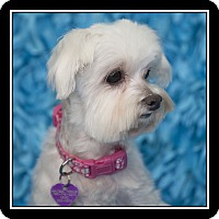 Adopt A Pet :: Annie - San Diego, CA