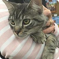 Adopt A Pet :: S'more - Spring, TX