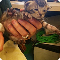 Adopt A Pet :: Geneva - Dallas, TX