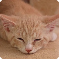Adopt A Pet :: Russell - Elkhorn, WI