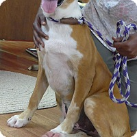 Adopt A Pet :: Roscoe - Manning, SC