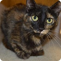 Adopt A Pet :: Sophie - Fort Collins, CO