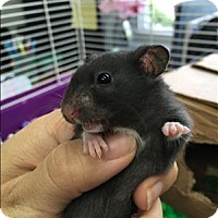 Adopt A Pet :: Howler - Madison, NJ