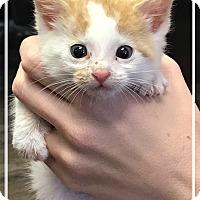 Adopt A Pet :: Eddie - Los Alamitos, CA