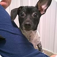 Adopt A Pet :: FERNANDO - Terre Haute, IN