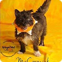 Adopt A Pet :: McCormick - Topeka, KS