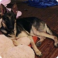 Adopt A Pet :: Greta - New Oxford, PA