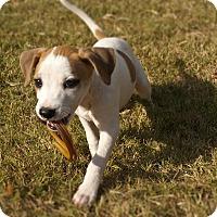 Adopt A Pet :: Annie - Woodstock, GA