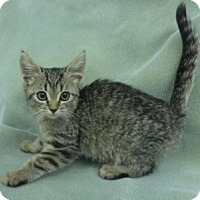 Adopt A Pet :: Rascal - Olive Branch, MS