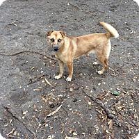 Adopt A Pet :: Crystal - Brownsville, TX