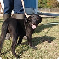 Adopt A Pet :: Daisy - Oakdale, LA