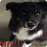 Adopt A Pet :: JONSEY - San Antonio, TX