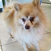 Adopt A Pet :: Dudley - Savannah, GA