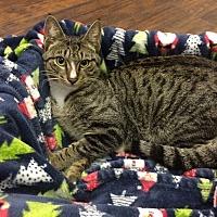 Adopt A Pet :: Kringle - Miami Shores, FL