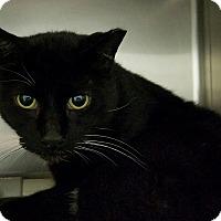 Adopt A Pet :: Oreo - Elyria, OH