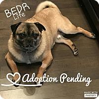 Adopt A Pet :: Frank - Regina, SK