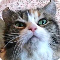 Adopt A Pet :: Curly Sue - Davis, CA