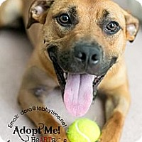 Adopt A Pet :: Justin - Myersville, MD