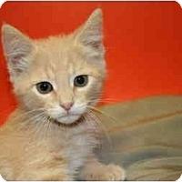 Adopt A Pet :: GLENN - SILVER SPRING, MD