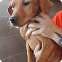 Adopt A Pet :: Lex - dawson, GA