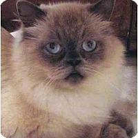 Adopt A Pet :: Jeremiah - Davis, CA