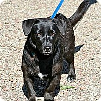 Adopt A Pet :: Onyx - Hastings, NY