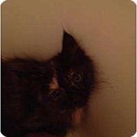 Adopt A Pet :: Mocha - Mobile, AL