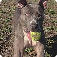 Adopt A Pet :: Tabitha - Richmond, CA