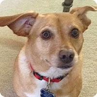 Adopt A Pet :: Millie and Max - Yorba Linda, CA